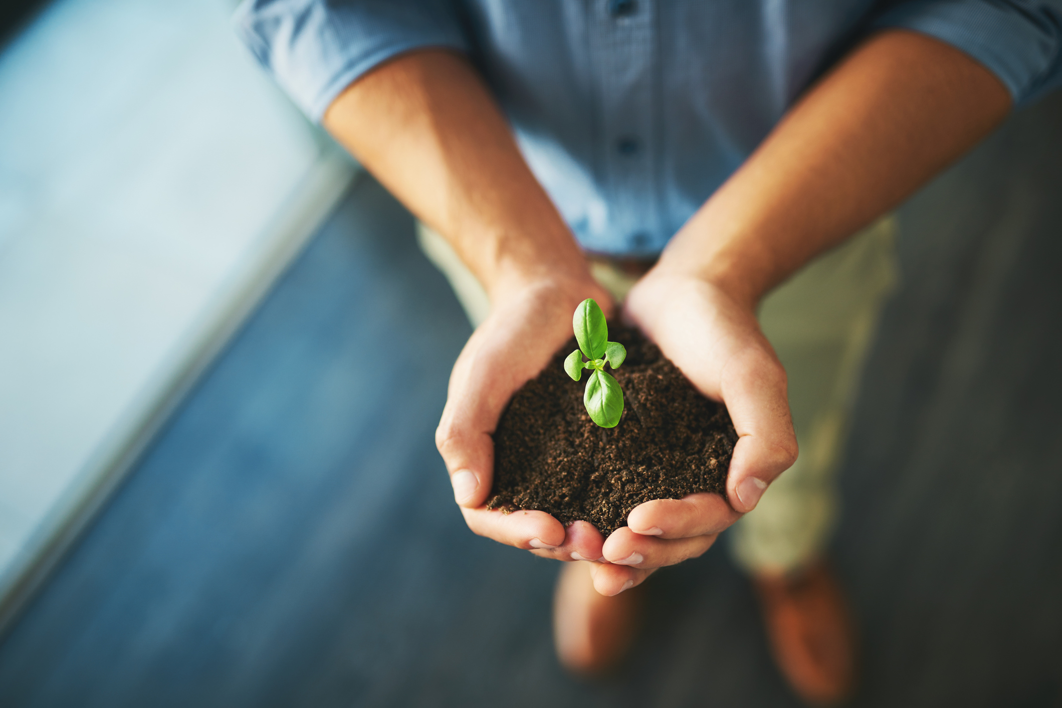 businessman holding a plant growing out of soil